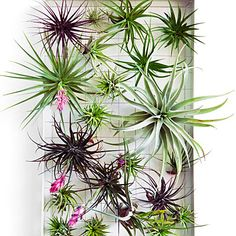 How to design with airplants. hipster dream catcher using an old bicycle wheel.
