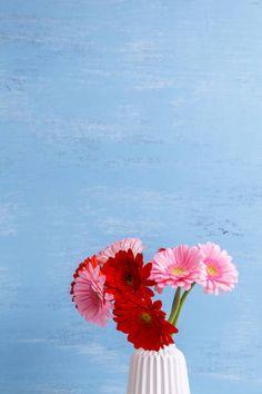 gerbera flowers in vase on wooden background