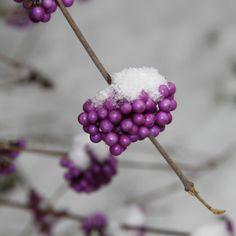 Liebesperlen im Schnee für Ganz nah dran 44/13