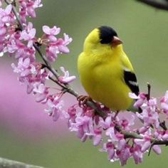 Such a pretty fellow! Gold Finch from Birds and Blooms.