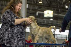 fujistu-henny | Hanácká národní výstava psů 13.1.2018 – rajce.net