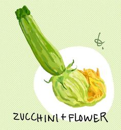 Zucchini with its flower