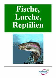 Biologie   Arbeitsblatt Reptilien Amphibien   5000 Übungen ...