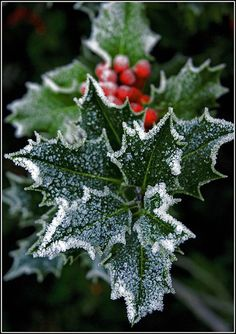 """From the light of my home to the light of all of yours, """"Blessed be this Solstice"""" """"Blessed Be"""" Frosted Holly"""