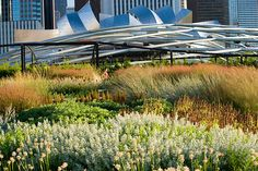 A Green City Guide to Chicago