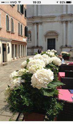 Veneza paz
