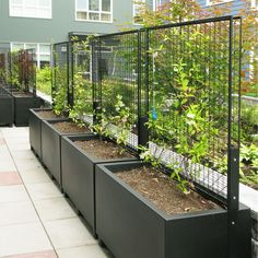 We offer a wide variety of accessories to help make your green wall project match your vision perfectly, from brackets and clips, to posts and planters. Vertical Garden Design, Backyard Garden Design, Backyard Landscaping, Rooftop Terrace Design, Rooftop Garden, Back Gardens, Outdoor Gardens, Garden Trellis, Metal Trellis