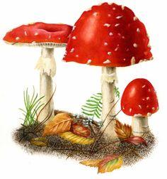 watercolor mushrooms