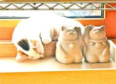 pinyamo [Mori Wajin's ie-neko cat]