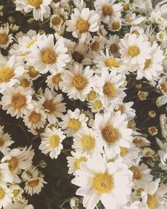 Bom dia ! �� #flowers #flowerslovers #flowergram #nature #bomdia #riodejaneiro #br #brasil #igers #igersbrasil #worldcaptures #ilovephotography #photography #photographer #fotografia #fotografando #instagood #amorporfotografia #fotosautorais #fotografos_brasileiros #pic #pictures #brazil #porai #love #positivevibes #goodvibes #flores #carioca #riopqtonorio http://gelinshop.com/ipost/1523191059214195248/?code=BUjdjK5g1ow