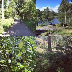 【koloni19】さんのInstagramをピンしています。 《買付の合間に、ヘルシンキ郊外の森へ行ってきました。お目当はもちろん、ブルーベリー(^ν^)クラウドベリーもありました。 ・ 新鮮な空気もたっぷり。北欧の森の恵みをいただいて、ラスト半日、最後まで素敵なものを探してきたいと思います。 ・ ・ ・ #フィンランド #ブルーベリー #森 #北欧 #北欧雑貨koloni #北欧雑貨》