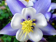 Little Blue Flower by emizael.deviantart.com on @deviantART