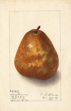 deweys.premium3.jpg (614×955) Artist: Ellen I. Schutt. From William A.G. Cobb, Richmond, Virginia, October 25, 1906.