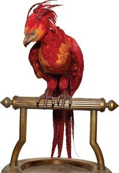Resultado de imagen para phoenix harry potter