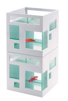 A stylish house for a stylish fish