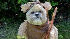 一部、激似。スターウォーズのコスプレをした犬や猫たちの写真19枚