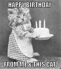 """101 Funny Cat Birthday Memes - """"Happy birthday from me and this cat."""" meme 101 Funny Cat Birthday Memes for the Feline Lovers in Your Life Friend Birthday Meme, Cat Birthday Memes, Funny Happy Birthday Meme, Cat Birthday Wishes, Cute Birthday Quotes, Birthday Kitty, Facebook Birthday, Birthday Ideas, Birthday Cards Images"""