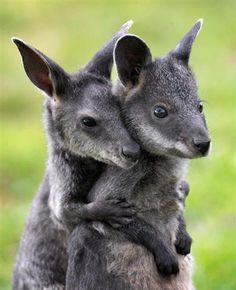 Süsse Baby-Wallabies (© Rex Features/FOTODOM.RU)