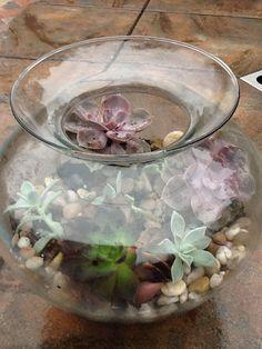Succelents in a jar