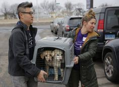 A crate holding two puppies rescued from a South Korean dog meat farm are loaded onto an animal transport vehicle near Kennedy Airport by Animal Haven Director of Operations Mantat Wong, left, and volunteer Nicole Smith in New York, March 26, 2017. What is this? Sponsored content is written by Global News' without any editorial influence by the sponsor. If you'd like to learn more... NEW YORK - A dog meat farm in South Korea is missing 46 dogs that arrived at New York's Kennedy Ai...