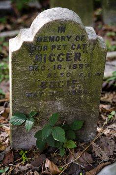 Pet Cemetery of Hyde Park, London- does that say what I think it says?