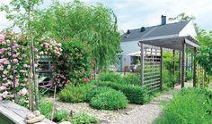 Trädgård med pergola