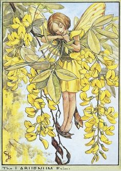 Illustration for the Laburnum Fairy from Flower Fairies of the Trees. Author / Illustrator Cicely Mary Barker