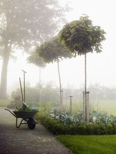 The morning fog is a sight I see often, this is how it feels to garden so early in the day. I am truly happy.