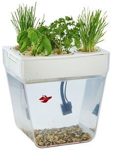 Best Stocking Stuffers 2016: Garden Fish Tank 2017