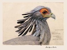 secretary bird - Bing images
