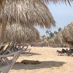 Outdoor Furniture, Outdoor Decor, Punta Cana, Free Travel, Hammock, Home Decor, Homemade Home Decor, Yard Furniture, Interior Design
