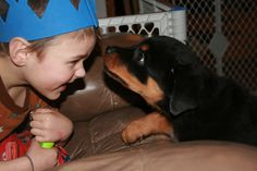 Kids and Rottweilers