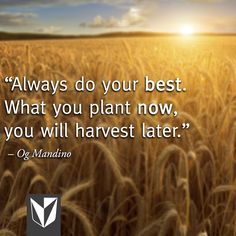 """""""Always do your best. What you plant now, you will harvest later. Run Like A Girl, Girls Be Like, Great Quotes, Me Quotes, Inspirational Quotes, Og Mandino Quotes, Book Of Proverbs, Do Your Best, Just Kidding"""