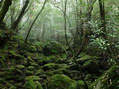Yakushima - yakushige/Getty Images