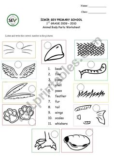 animal body coverings first grade science first grade science classroom. Black Bedroom Furniture Sets. Home Design Ideas
