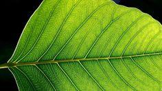 Ecología: Descubre las noticias de última hora y los mejores videos