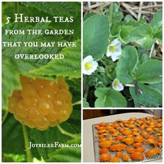 5 Herbal teas from the garden that you may have overlooked -- Joybilee Farm