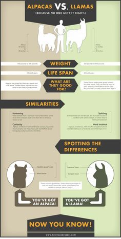 Llama vs alpaca. Repinned by Elizabeth VanBuskirk. A good chart for identifying llamas & alpacas.