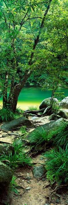 Mossman Gorge. Queensland Australia - Tropical Paradise ❤