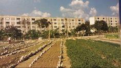 Jose Marti district in Santiago. Pre-fab concrete apartment blocks. Early 1960's.  Thanks Fidel.