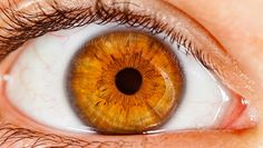The eyes do more than allow us to see; in fact, certain parts of the eye can indicate underlying health problems. Ocular Migraine, Ocular Rosacea, Easy Healthy Breakfast, Easy Healthy Dinners, Breakfast For Kids, Why Do We Cry, Types Of Stress, Parts Of The Eye, Amber Eyes