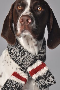 10 gifts you should buy your puppy this season