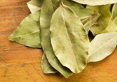 Lovor leči sve od kašlja do čukljeva: Svi narodni recepti na jednom mestu! Short Hair Cuts, Short Hair Styles, Holistic Nutrition, Natural Medicine, Good To Know, Plant Leaves, Herbs, Nature, Plants
