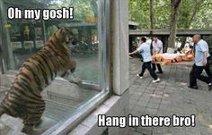 10 Best Funny Animal Photos for Friday. Serving only the best funny photos in 2019 that will help you laugh today. Funny Animal Memes, Animal Quotes, Cute Funny Animals, Funny Animal Pictures, Funny Cute, Funny Photos, The Funny, Funny Memes, Hilarious