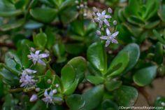 Keď pestujete túto rastlinu, určite si ju z bytu nedávajte preč a rozmnožte si ju. Keď uvidíte, aké ma využitie, budete ju strážiť ako oko v hlave - chillin.sk Diy Wreath, Wreaths, Feng Shui, Aloe Vera, Gardening, Health, Plants, Forks, Crown Flower