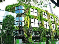 Si estan preguntándose ¿Cómo hacer una fachada vegetal en un edificio? aqui algunas cosas a tener en cuenta sobre la Vegetación en fachadas ...