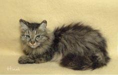 AMAZING !  Needle felted cat by Japanese felting artist Hinali