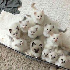 Котики для настроения