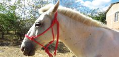 Vets for Horses Appeal ; Vets for Horses  Chile's sight was saved by our team of trained vets and students. His case highlights the need for local vets across the developing world to be trained to treat horses.