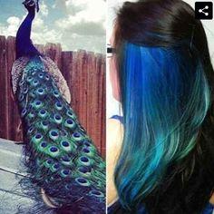 Peek-a-boo peacock colors